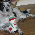 ethel with christmas toy